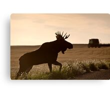 Prairie Moose Canvas Print