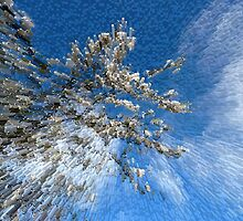 Apple blossom columns by Robert Gipson