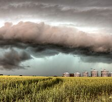 Storm Clouds Saskatchewan over planted wheat fields by pictureguy