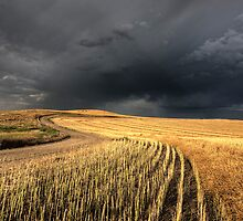 Storm Clouds Saskatchewan over combined canola field by pictureguy