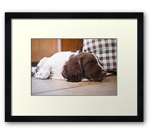 Sleeping Springer Framed Print