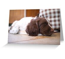 Sleeping Springer Greeting Card
