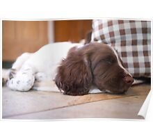 Sleeping Springer Poster