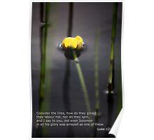 Water Lily  Luke  Poster