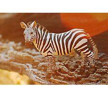 Zebra at sunrise Photographic Print