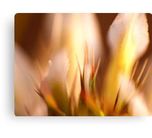Macro Flower Abstract Canvas Print