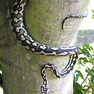 Constrictor by richeriley