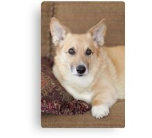 Kabo On His Pretty Sofa ~ Canvas Print