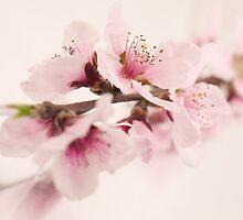 Peach Flower Cluster by Mark Shearin