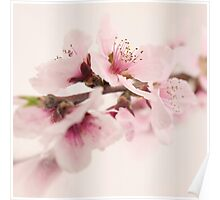 Peach Flower Cluster Poster
