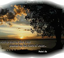 Psalm 1:3 - Meditation on God's Word by JLOPhotography