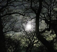 Moon Through Tree's by MikeOimages