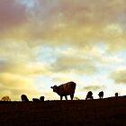 Herd on the hill by Greg  Walker