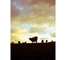 Herd on the hill Photographic Print