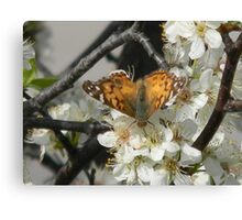 Butterfly Drinks Canvas Print