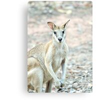 What's Up? - wallaby Canvas Print