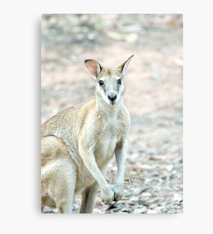 What's Up? - wallaby Metal Print
