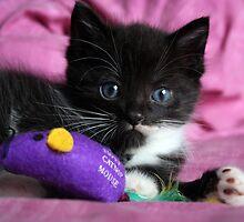 Cute kitten by llvllagic