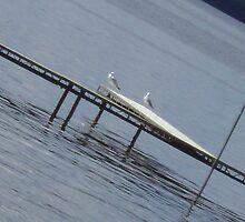 Seagulls on the Docks by whitebuffalo
