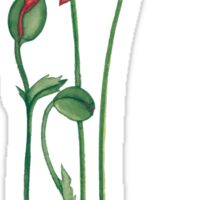 flowers, poppies Sticker