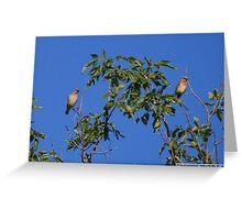Cedar Waxwings Greeting Card
