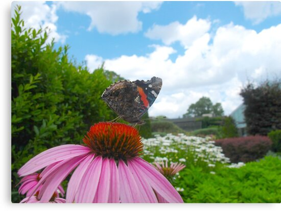 Poser Red Admiral by MarianBendeth