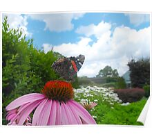 Poser Red Admiral Poster