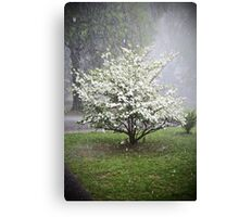 Spring in Mississippi, USA Canvas Print