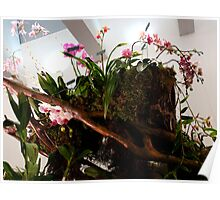 Wheelbarrow of Orchids Poster