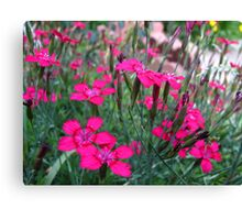 at the top of pink lungs Canvas Print