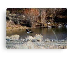 Bald eagle flying to the pond Canvas Print