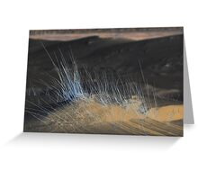 Silver Beach Grass Greeting Card