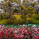 Mepkin Abbey - Azaleas by photosan