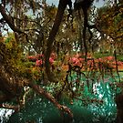 Mepkin Abbey - Lagoon by photosan