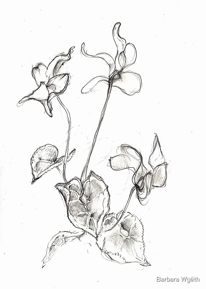 Cyclamen by Barbara Wyeth