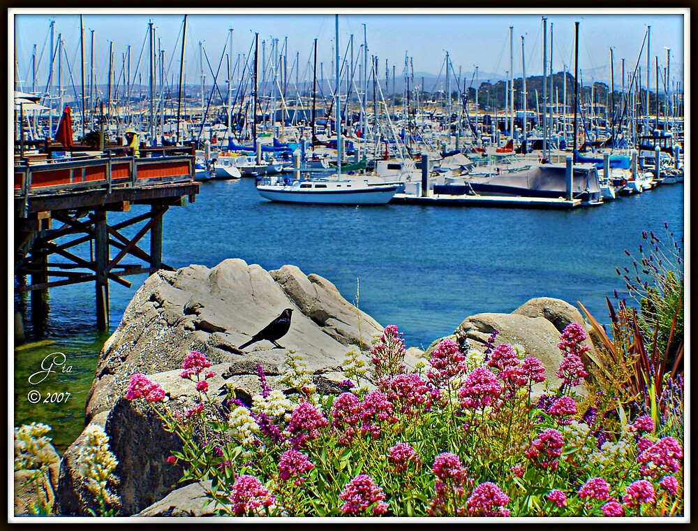 """""""Monterey Bay Marina"""" by Gail Jones"""