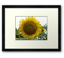 Happy Bright Sunflower Framed Print