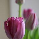 Tulip Time by Keeawe