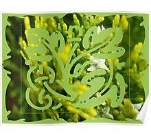 cypress bush Poster