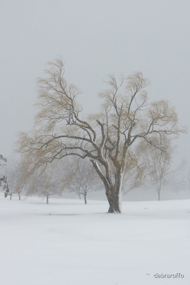 Standing Alone ,Weeping Willow Winter by debraroffo