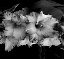 Aren't You Gladiolas by Kitrina Arbuckle