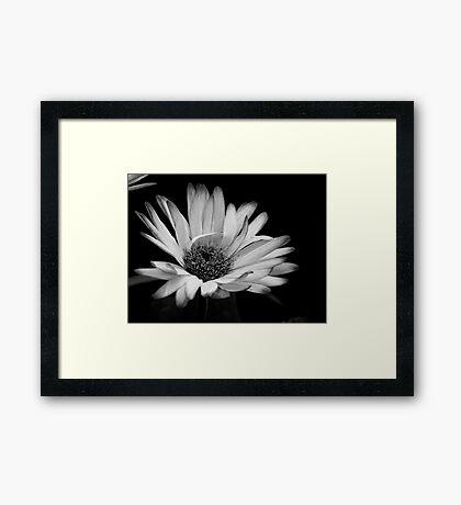 Cheerful Daisy Framed Print