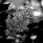 Flowers in Black and White by Kitrina Arbuckle