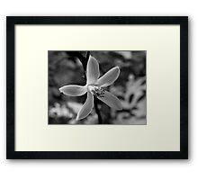 Orange Blossom Special Framed Print