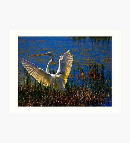 Wings In White Adorn Art Print