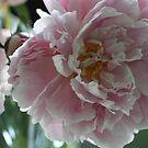 Summer Flowers by decorartuk