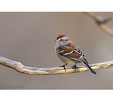 American Tree Sparrow Photographic Print