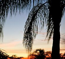 Palm Sunset by K. Abraham