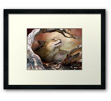Wildcat Sunrise Framed Print