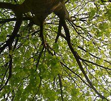 Big tree by madeyemaddy